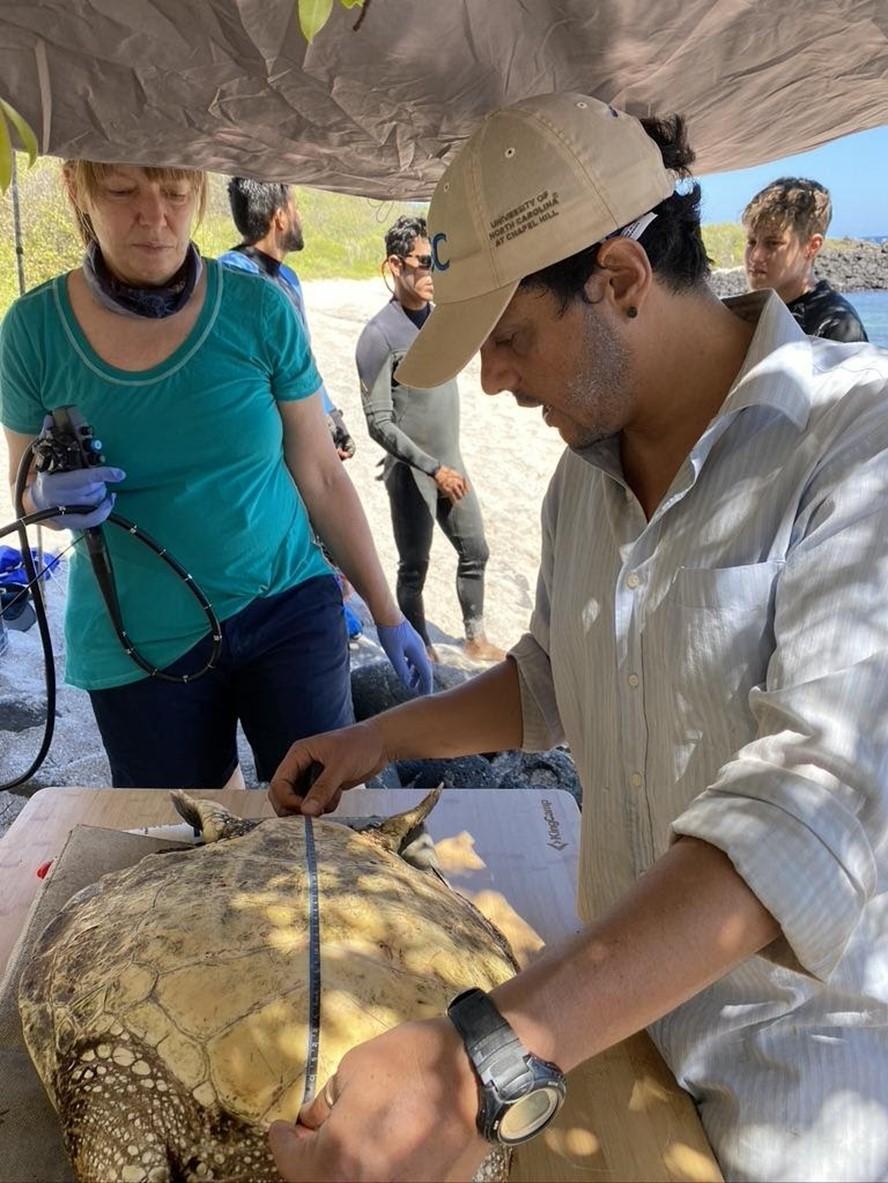 Juan Pablo Muñoz measuring a captured sea turtle